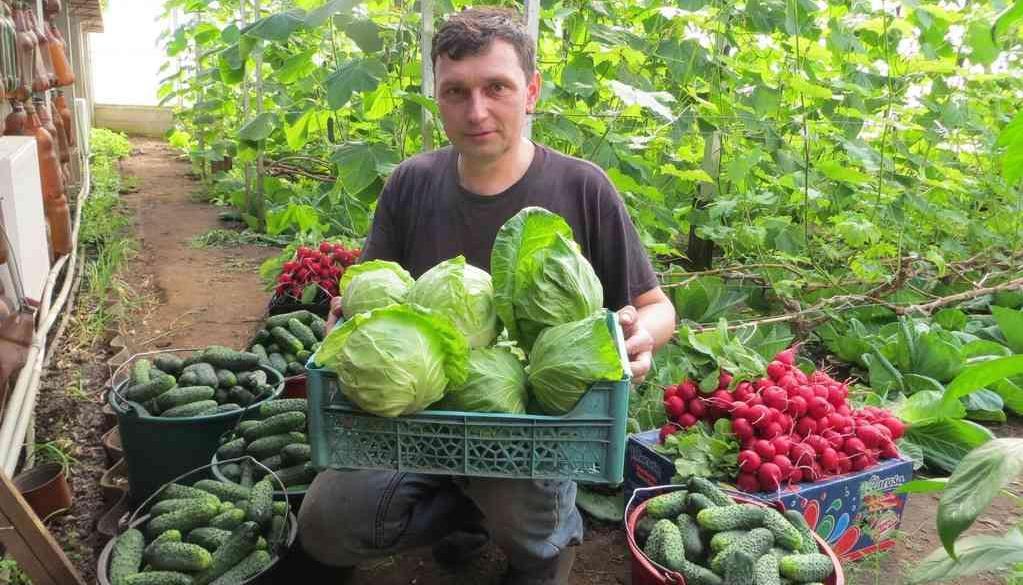Огородничество без химии: уроки органического земледелия от новатора из Сумщины