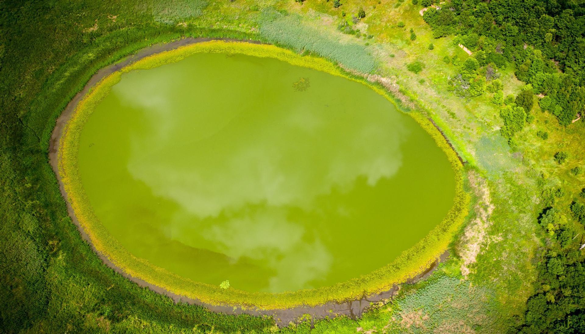 Під час обльоту заповідної території Чорнобиля знайшли невідоме раніше озеро