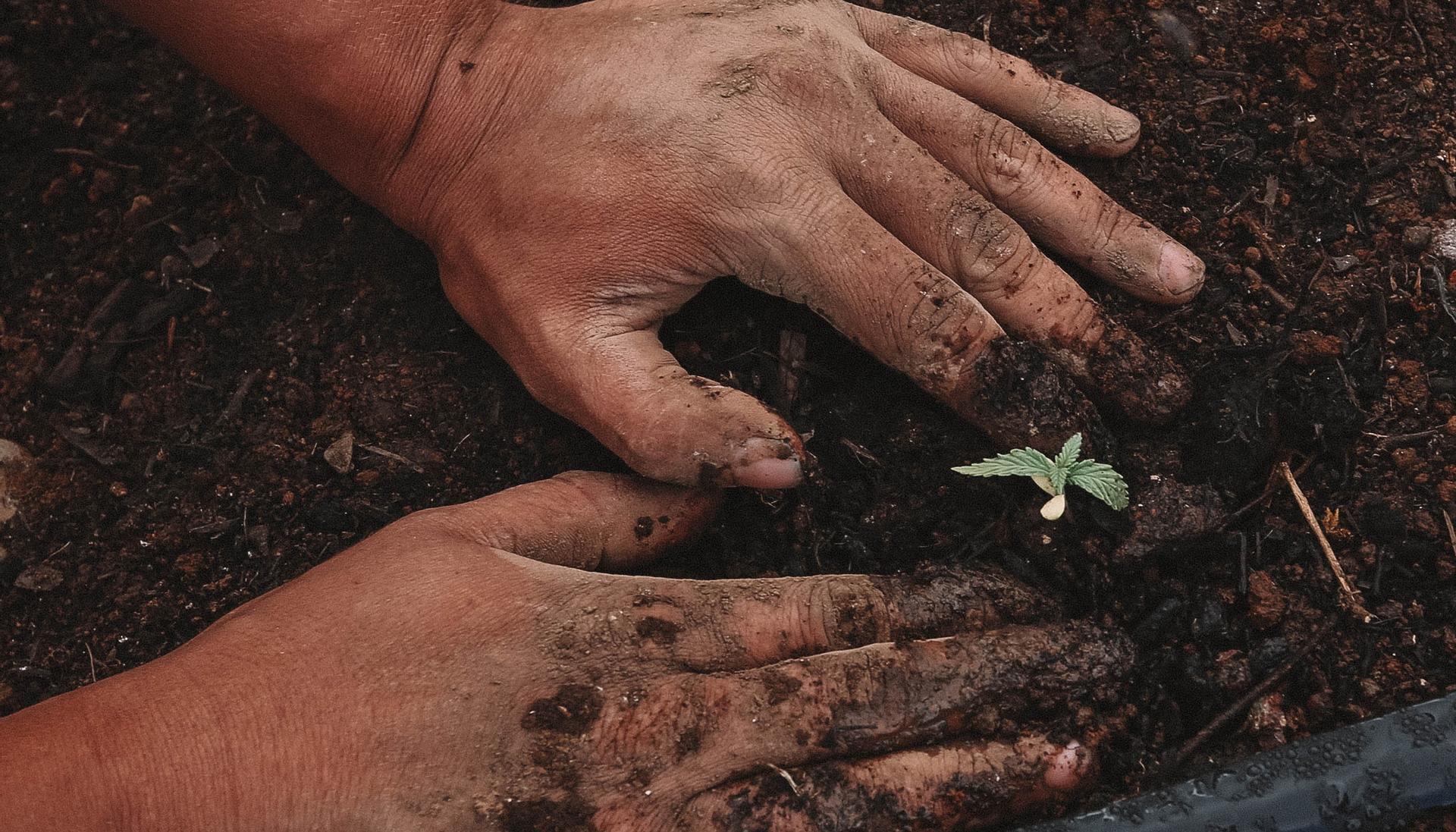 13 миллиардов гривен планируется выделить аграриям Украины