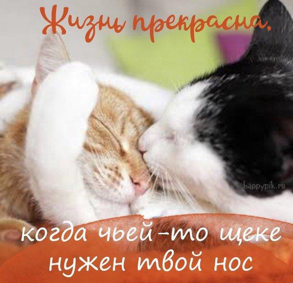 nk_hauz/-mhzyjlgfarrp9x0_2li.jpg